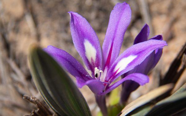 Search and Rescue of plants that face habitat destruction