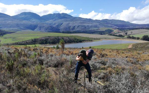 Increasing botanical biodiversity in old crop fields