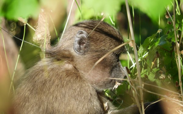 Rescuing a juvenile baboon from a snare